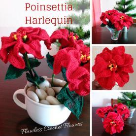 Poinsettia Harlequin Flower-poinsettia-harlequin-jpg