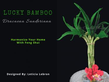Crochet Lucky Bamboo-lucky-bamboo-dracaena-sanderiana-2-jpg