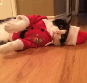 A Bad Case of the Doldrums-santa-cat-jpg