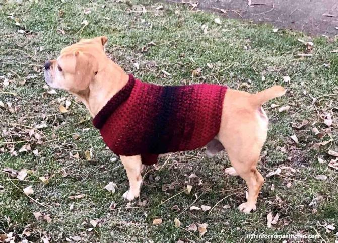 Quick & Easy Medium-size Dog  Sweater-crochet-medium-dog-sweater-7-final-jpg