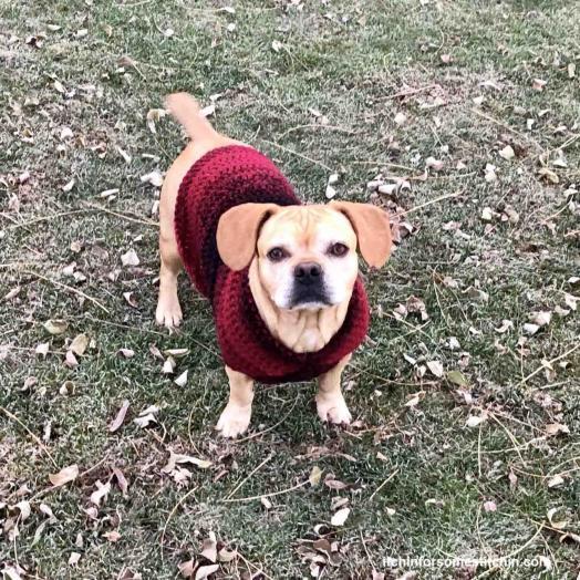 Quick & Easy Medium-size Dog  Sweater-crochet-medium-dog-sweater-13-final-jpg