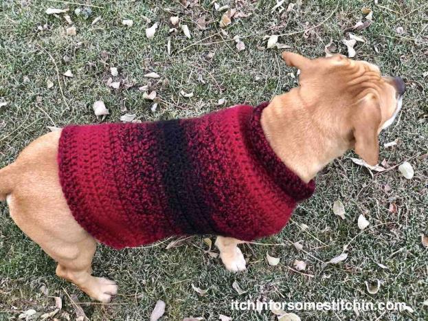 Quick & Easy Medium-size Dog  Sweater-crochet-medium-dog-sweater-19-final-jpg